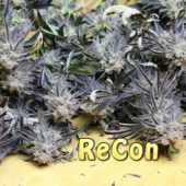 Trimming ReCon