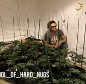 School of Hard Nug's Homegrown Seeds Episode 22