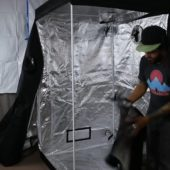 Setting up a Cool Grows cannabis tent